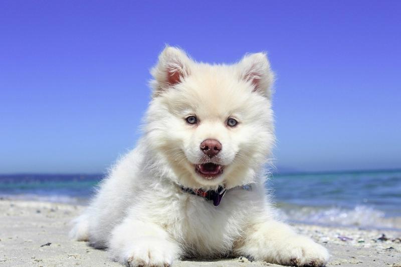 Urlaub Im Mobilheim Mit Hund